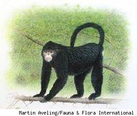 Stryker Primate