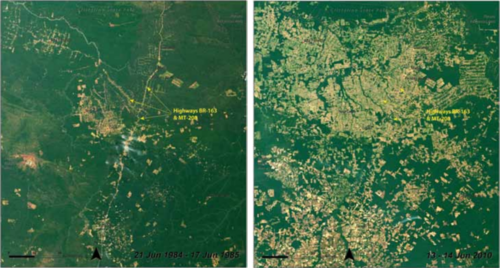 Enormous-portions-of-the-amazon-rainforest-have-been-cleared-for-cattle-pastures-and-farms