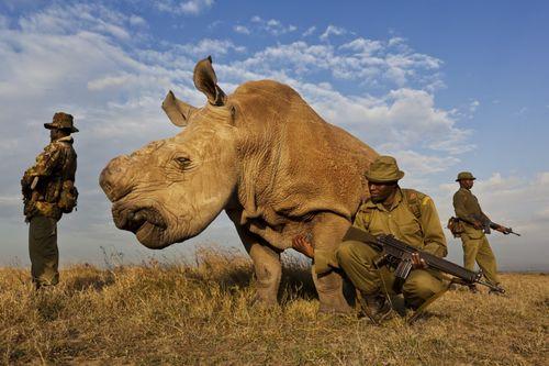 Rhino-wars-Rhinoceros-photo-Brent-Stirton