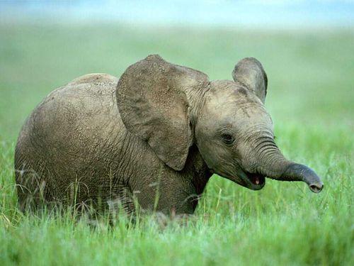 B9_elephant
