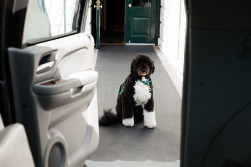 Bo-the-obama-family-dog-waits-for-first-lady-michelle-obama-on-the-south-lawn-driveway-before-departing-the-white-house