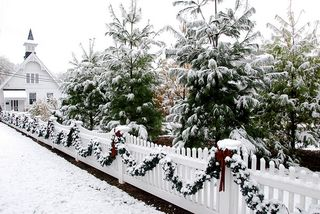 White-christmas_trees[1]