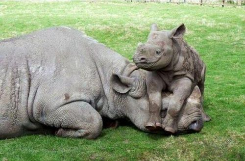 L-Baby-Rhinos-need-love-too