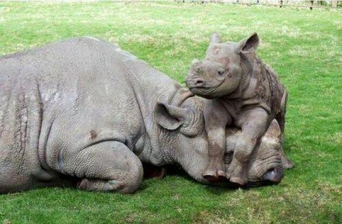 L-Baby-Rhinos-need-love-too