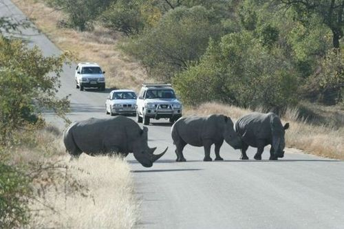 Kruger-National-Park-Safari