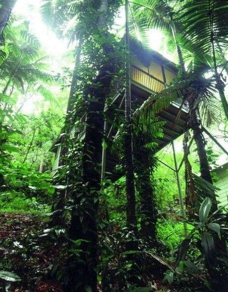 Item8_rendition_slideshowWideVertical_daintree-eco-lodge-australia