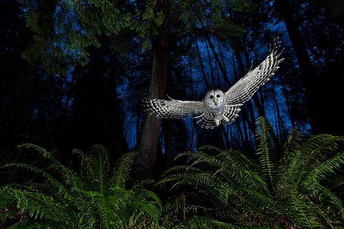 2013-Wildlife-Photographe-001