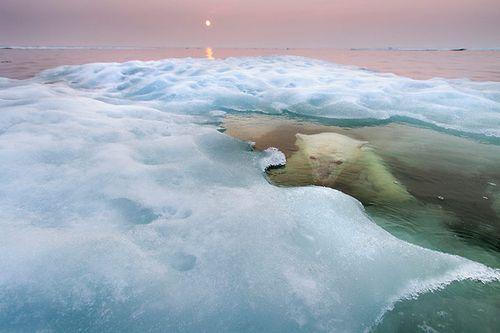 2013-Wildlife-Photographe-003