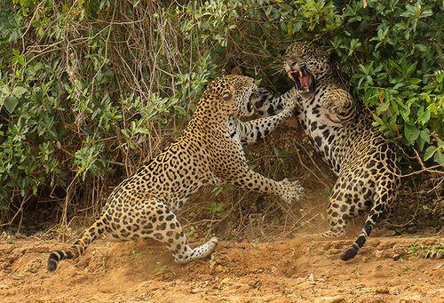 2013-Wildlife-Photographe-006