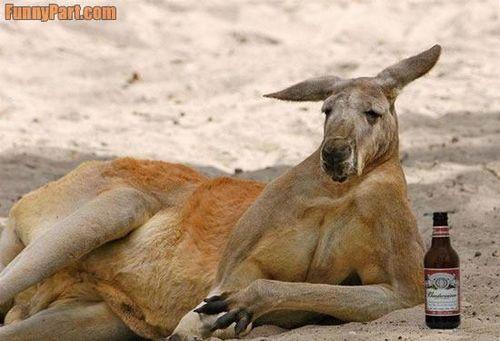 Funnyaustraliankangaroo_funnyaustralia