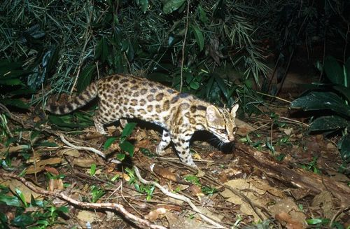 Blog-wild-cat-discovery-600x392