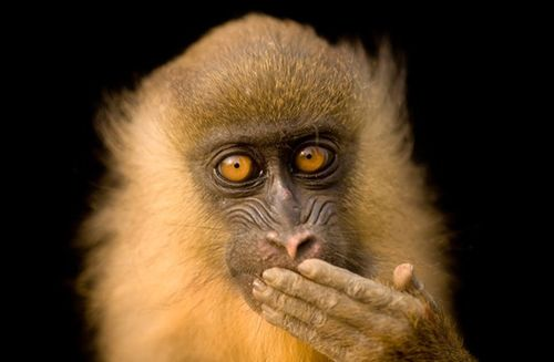Monkey_main